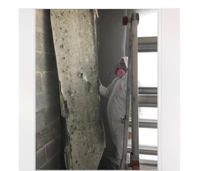 Mold drywall cleanup