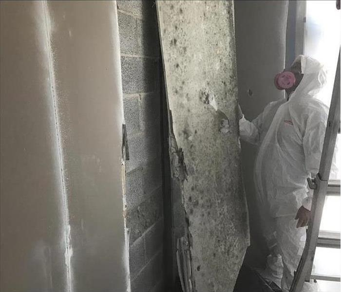 Mold Remediation 3 Strategies for Controlling Mold in Your Home
